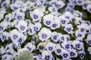Purple, White, Yellow Flowers
