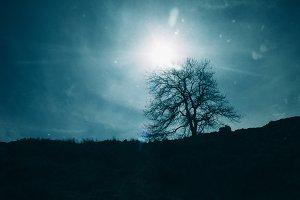 Hillside Tree Silhouette