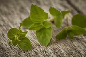 Herb Oregano leaves on rustic wooden background