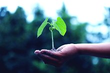 Growing Plant | Growing Business