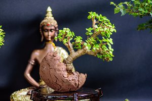 Bonsai prepared to expose I