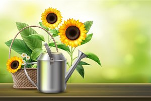 Watering can and sunflowers