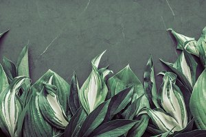Texture foliage creative
