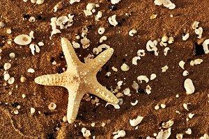 Starfish and sea shells on the beach