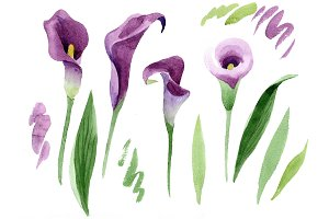 Aquarelle purple callas PNG set