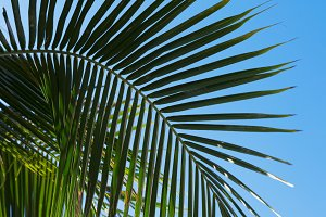 Tropic palm leaves in front of the blue sky