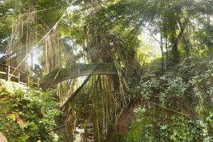 Tropical exotic rain Sacred Monkey forest jungle on Asian Bali island with sun