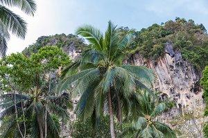 Popular travel tropical karst rocks perfect for climbing, Krabi
