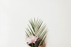 Stock Photos | Mum/Palm Leaf