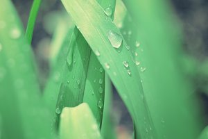 Fresh grass with rain drops.