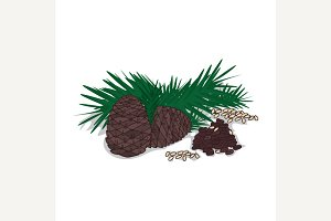 Isolated clipart Pine nut