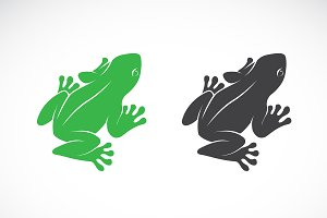 Vector of frogs design. Animal.