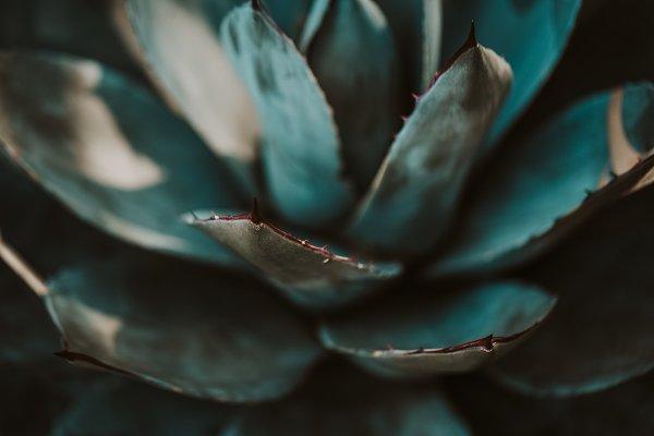 Nature Stock Photos: Valeria Art - Closeup of green tropical plants