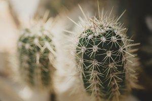 Closeup of green tropical cactus