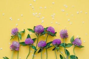 Violet clover flowers