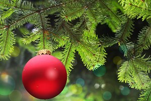red Christmas ball and green spruce