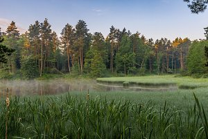Beaver pond at sunrise