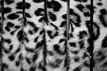 Big cat in cage- fur behind zoo bars