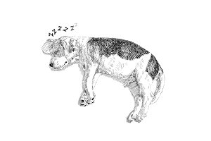 Drawing of adorable sleeping beagle