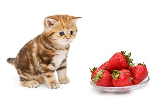 Kitten and a bowl with strawberries