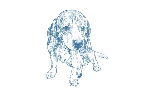 Drawing of adorable beagle