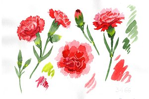 Red dianthus PNG watercolor flower s