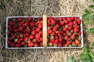 Strawberry inside basket