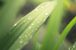Fresh grass with rain drops.