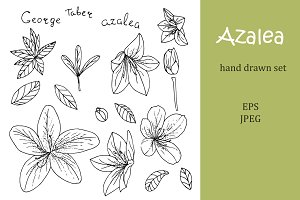 Azalea hand drawn elements set