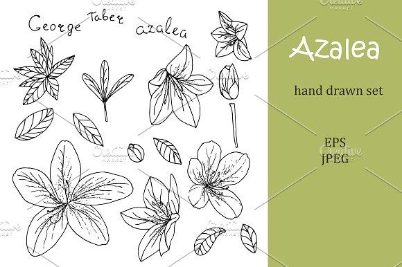 Azalea Hand Drawn Elements Set