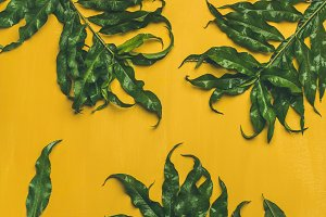 Tropical tree green leaves over bright yellow background, vertical composition