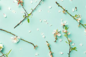 Spring floral background with white almond flowers over blue background