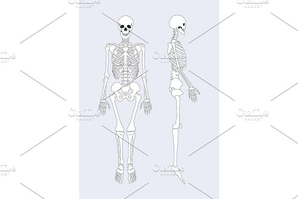 Skeletal System Of Human Body Vector Illustration