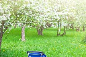 Baby stroller in the blooming garden