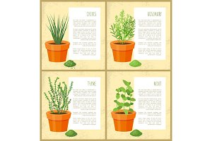 Chives and Rosemary Collection Vector Illustration