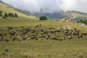 Sheepin Mountains, Caucasus