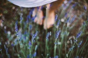 lavender in the garden