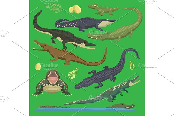 Crocodile Alligator Green Vector Reptile Illustration Of Wild Animals Set Collection Cartoon Style Cartoon Green Crocodile Reptile Open Mouth And Front Top View Old And Young Reptile