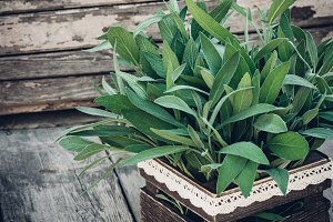 Salvia officinalis. Sage leaves on old wooden table. Garden sage. Rustic wooden box and handmade lace. Retro magazine picture. Copy space