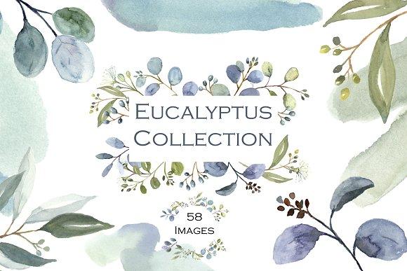 Eucalyptus Watercolor Clip Art