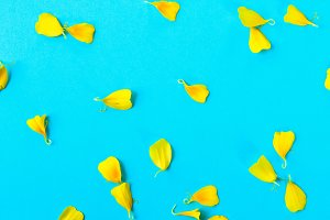 Petals of a yellow flower on a pastel blue background.