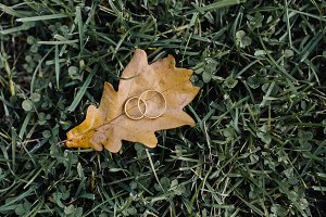 rings on an oak leaf on the grass