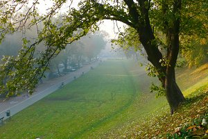 park landscape