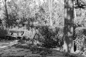 Bank in the Park Autumum Black White