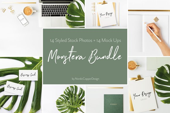 Monstera Office Styled Stock