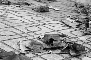 Leaves in the Sidewalk Black White