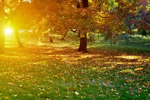 Sun light in autumn park