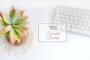 Stock Photo - Succulent Desktop