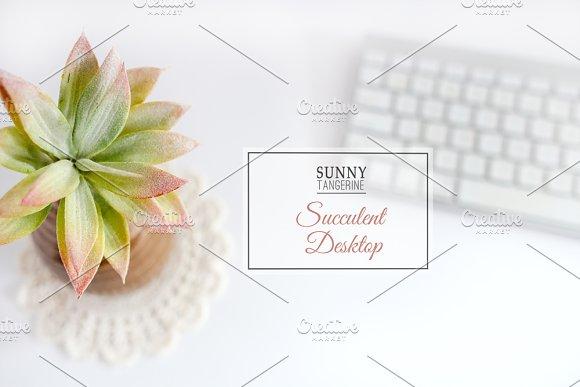 Stock Photo Succulent Desktop