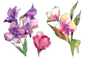 Colorful alstroemeria PNG watercolor